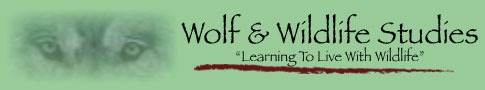Wolf and Wildlife Studies